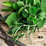 ۹ سبزی خوردن که میتوانید به راحتی در خانه پرورش دهید